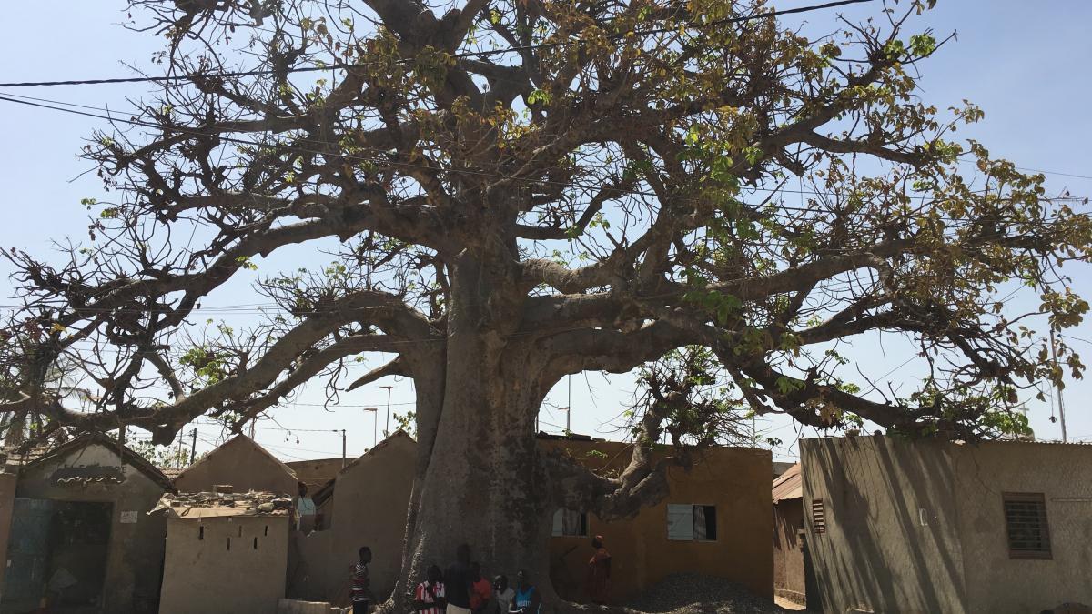 fadiouth baobab sacro del villaggio