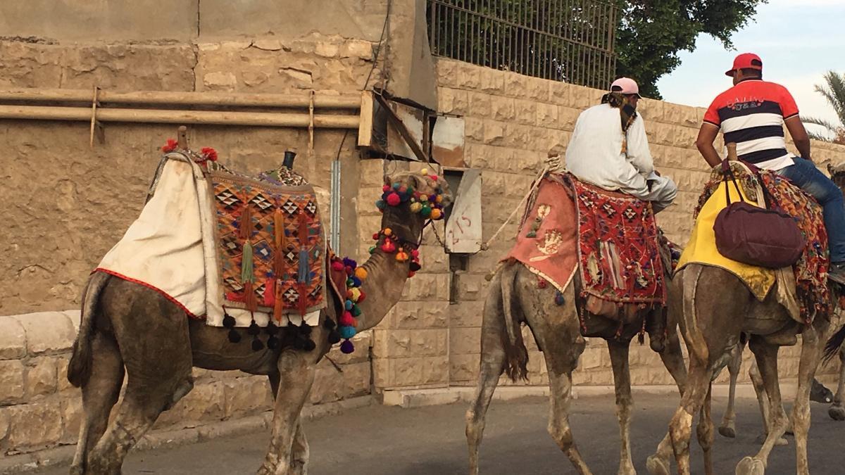 Il Cairo - La Città dei Faraoni (e del Traffico) - il mezzo di locomozione a Km zero