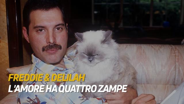 Freddie & Delilah - L'amore ha quattro zampe